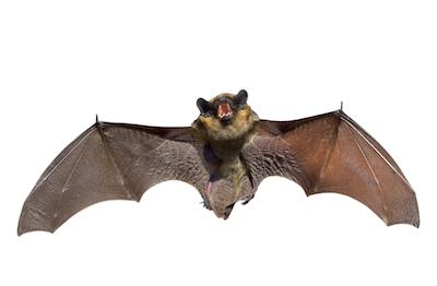 bat control service